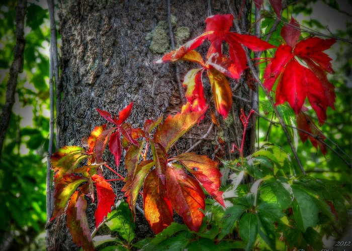 Granite Mountain Wilderness Greeting Card featuring the photograph Autumn Leaves High On The Tree Trunk by Aaron Burrows
