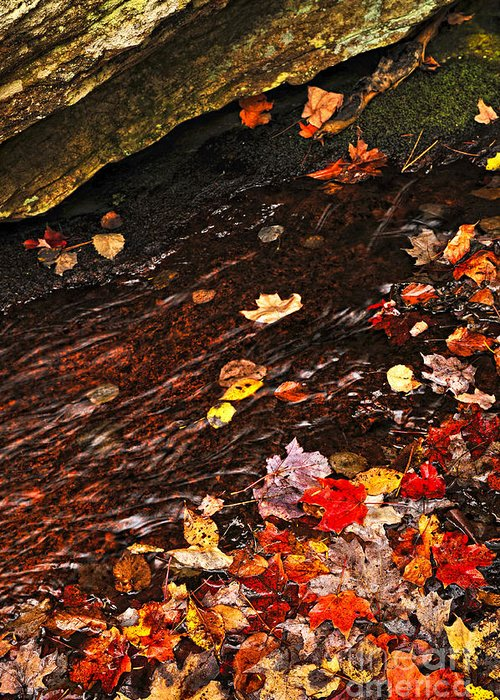 Creek Greeting Card featuring the photograph Autumn Leaves In River by Elena Elisseeva