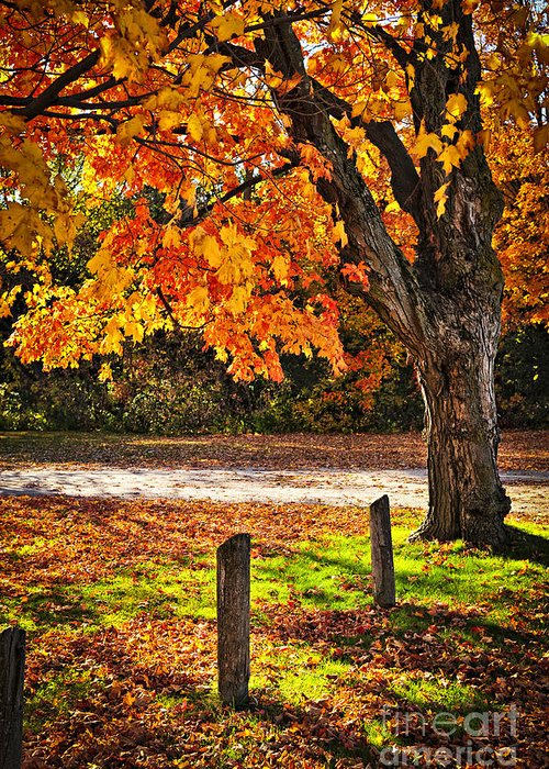 Maple Greeting Card featuring the photograph Autumn Maple Tree Near Road by Elena Elisseeva