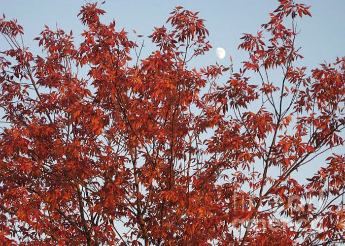 Red Brown Leaves Greeting Card featuring the photograph Autumn Moon by Sonali Gangane