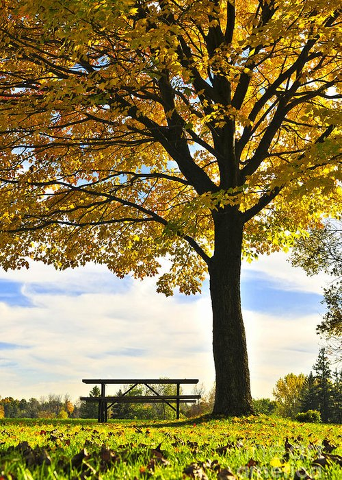 Fall Greeting Card featuring the photograph Autumn Park by Elena Elisseeva