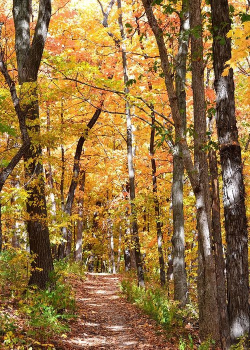 Fall Greeting Card featuring the photograph Autumn Path 2 by Kim Hymes