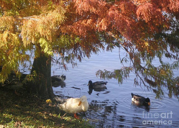 Nature Greeting Card featuring the photograph Autumn Peace by Lucyna A M Green