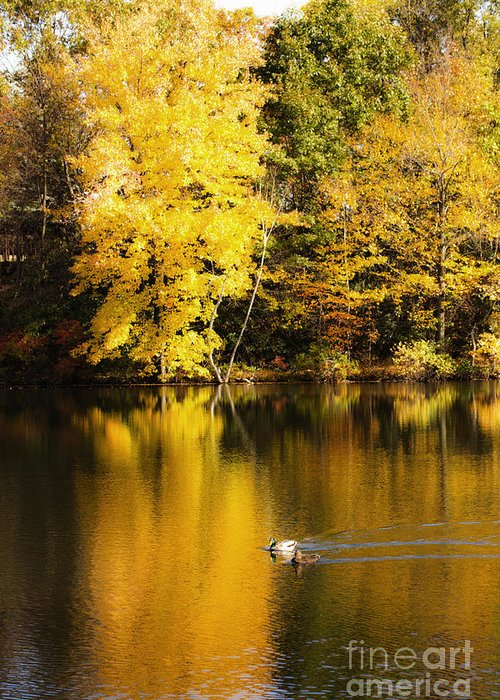 Autumn Greeting Card featuring the photograph Autumn Pond by Leslie Leda