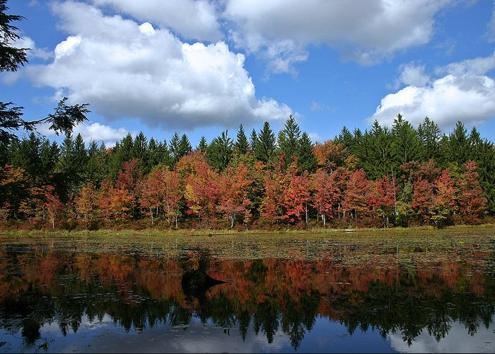 Autumn Greeting Card featuring the photograph Autumn Reflection by David Rucker