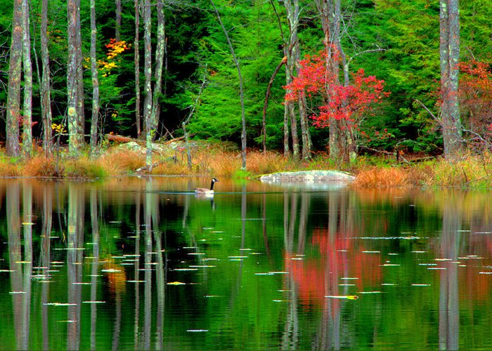 Lake View Greeting Card featuring the digital art Autumn Reflections by Aron Chervin