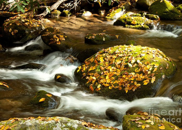 Autumn Greeting Card featuring the photograph Autumn Stream by Lena Auxier