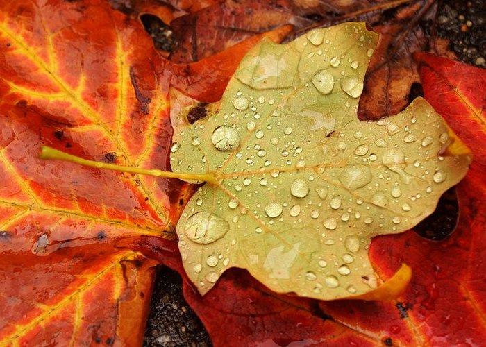 Leaves Greeting Card featuring the photograph Autumn Treasures by Matthew Green