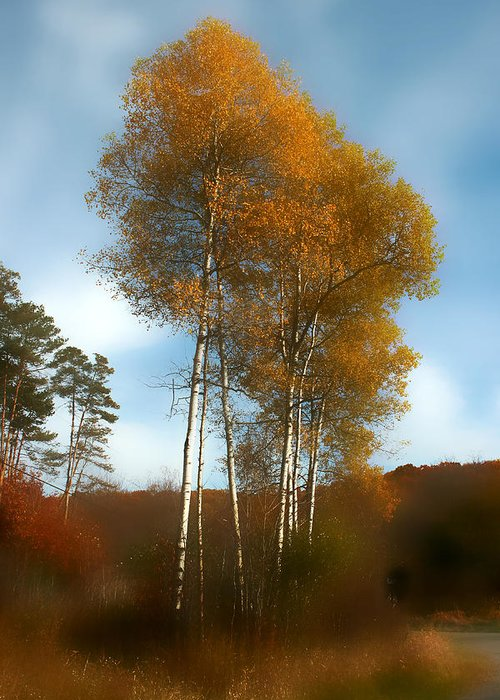 Trees Greeting Card featuring the photograph Autumn Trees by Jim Painter