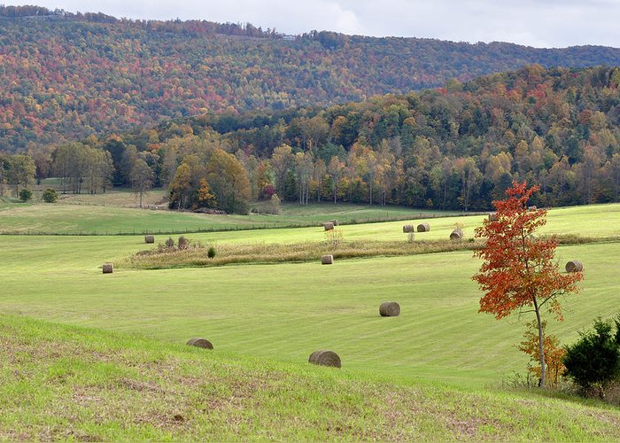 Landscapes Greeting Card featuring the photograph Autumn Valley Hay Bales by Jan Amiss Photography