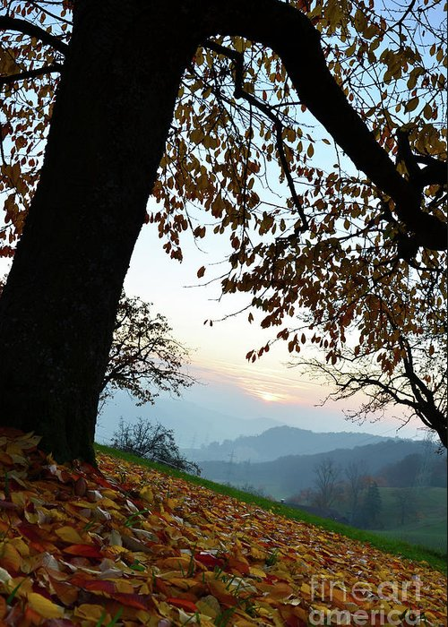 Photograph Greeting Card featuring the photograph Autumn View by Bruno Santoro