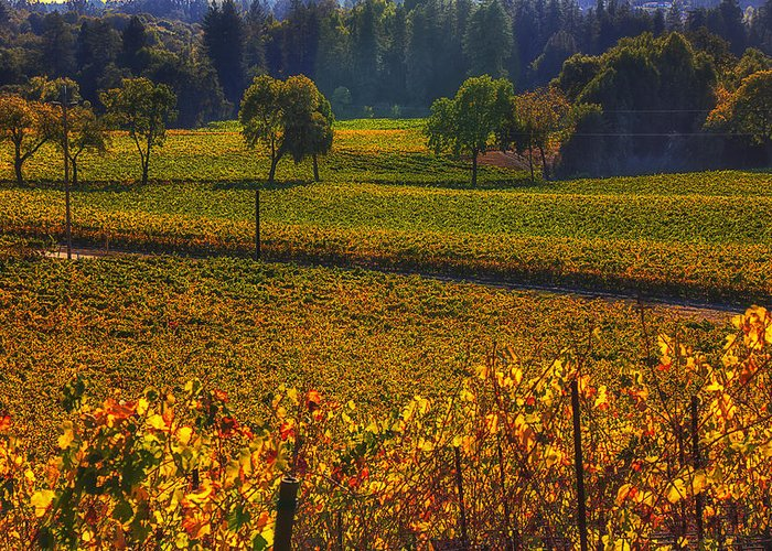 Autumn Greeting Card featuring the photograph Autumn Vineyards by Garry Gay