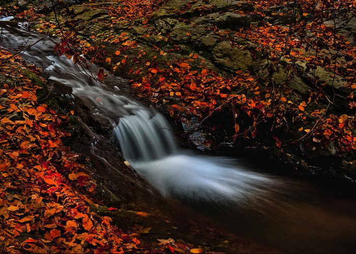 Nature Greeting Card featuring the photograph Autumn Waterfall by Irinel Cirlanaru