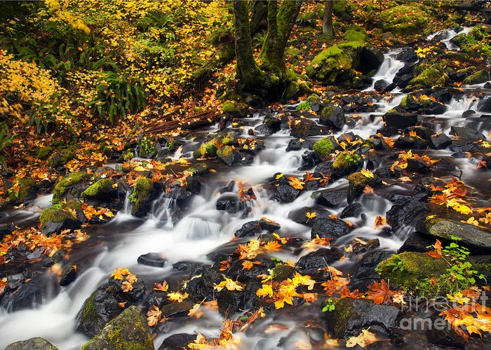 Autumn Greeting Card featuring the photograph Autumn's Staircase by Mike Dawson