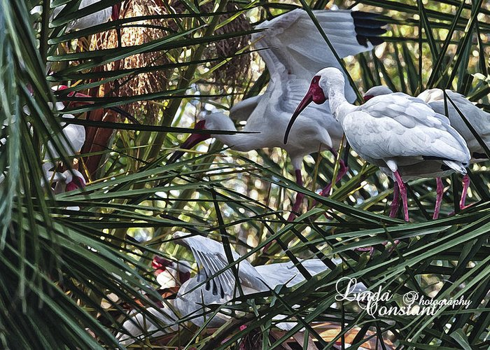Crane Greeting Card featuring the photograph Aviary by Linda Constant