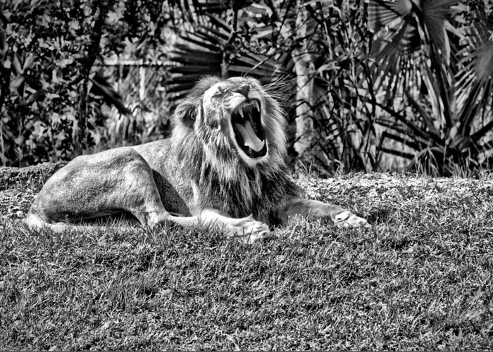 Zoo Greeting Card featuring the photograph Awake by Jose Carlos Heredia