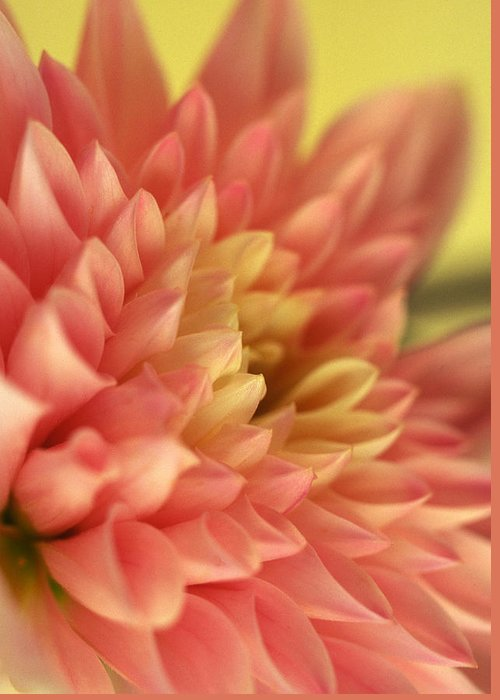 Floral Greeting Card featuring the photograph Awakened by Kathy Yates