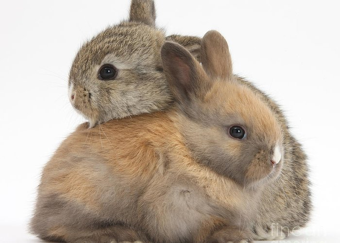 Animal Greeting Card featuring the photograph Baby Rabbits by Mark Taylor