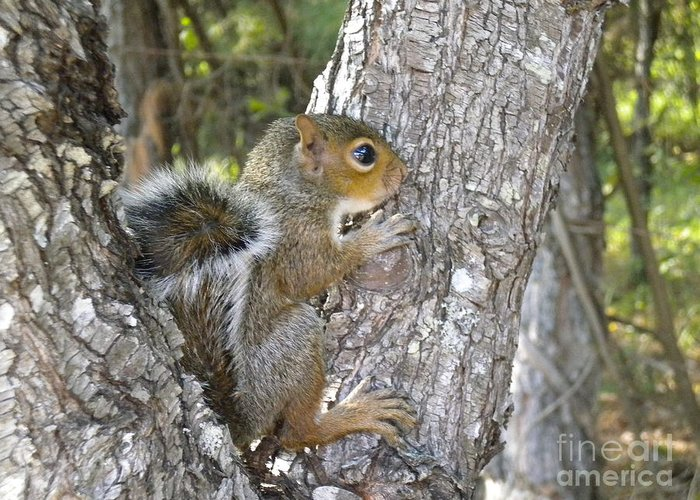 Animal Greeting Card featuring the photograph Baby Squirrel by Tessa Priddy