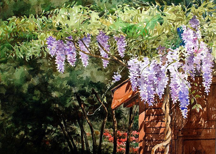 Watercolor Purple Wisteria Greeting Card featuring the painting Backyard Wisteria by Peter Sit