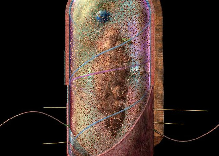 Bacillus Greeting Card featuring the digital art Bacterial Cell Generalised by Russell Kightley