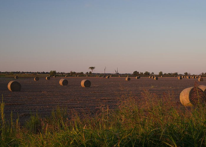 Peanut Greeting Card featuring the photograph Bales In Peanut Field 1 by Douglas Barnett