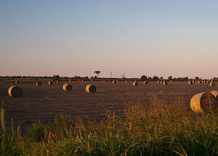 Peanut Greeting Card featuring the photograph Bales In Peanut Field 10 by Douglas Barnett