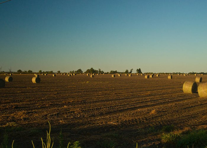 Peanut Greeting Card featuring the photograph Bales In Peanut Field 9 by Douglas Barnett