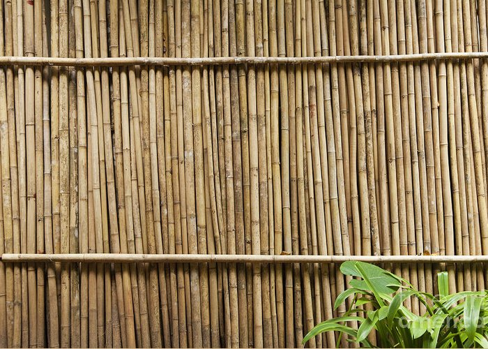 Architectural Detail Greeting Card featuring the photograph Bamboo Fence by Don Mason