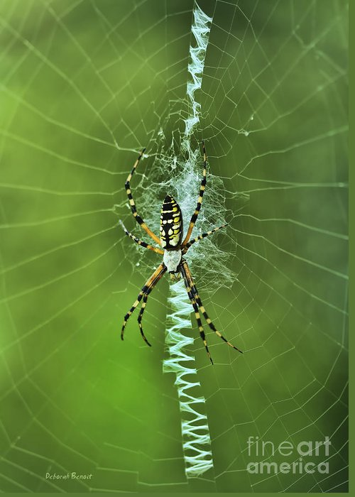 Spider Greeting Card featuring the photograph Banana Spider With Web by Deborah Benoit