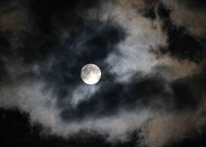 Moon Greeting Card featuring the photograph Bark At The Moon by Tricia Janush