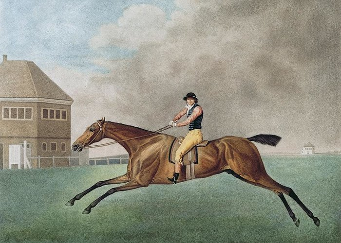 Xyc308303 Greeting Card featuring the photograph Baronet by George Stubbs