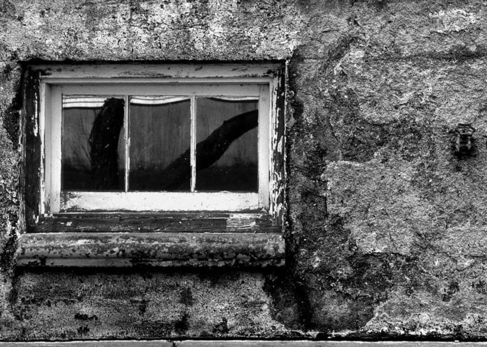 Window Greeting Card featuring the photograph Basement Window by Tony Ramos