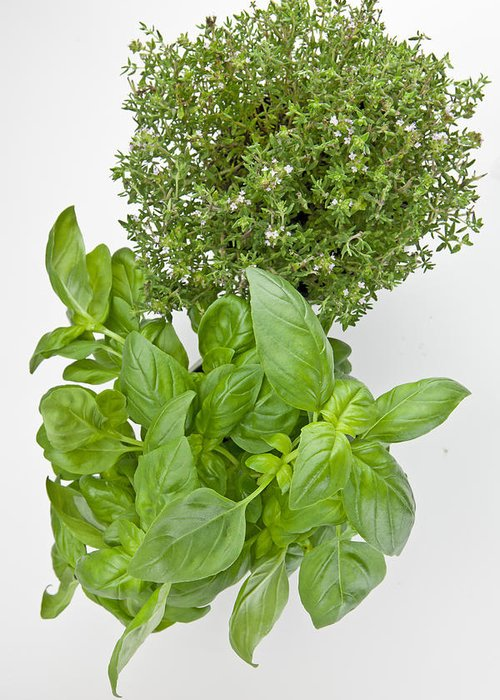 Aromatic Herbs Greeting Card featuring the photograph Basil And Thyme by Joana Kruse