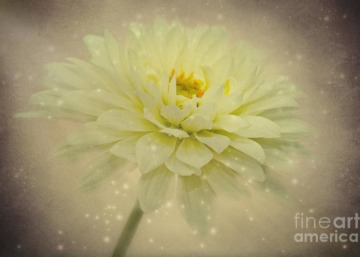Dahlia Greeting Card featuring the photograph Be A Star by Angela Doelling AD DESIGN Photo and PhotoArt