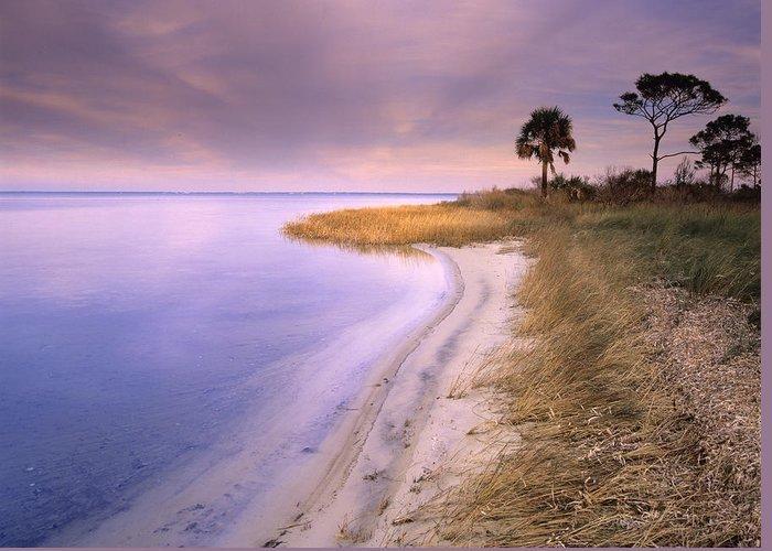 00175930 Greeting Card featuring the photograph Beach Along Saint Josephs Bay Florida by Tim Fitzharris