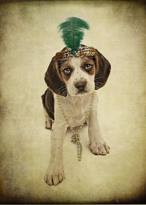 Pet Greeting Card featuring the photograph Beagle Puppy Flapper by Susan Schmitz