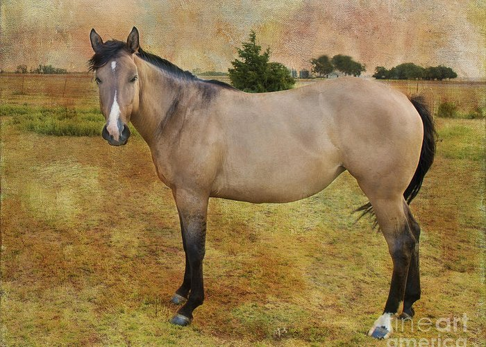 Horse Greeting Card featuring the photograph Beautiful Buckskin by Betty LaRue