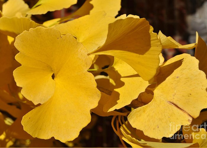 Yellow Leaves Greeting Card featuring the photograph Beauty In The Leaves by Denise Ellis