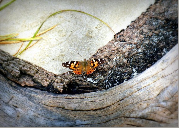 Butterfly Greeting Card featuring the photograph Beauty On The Beach by Karen Wiles