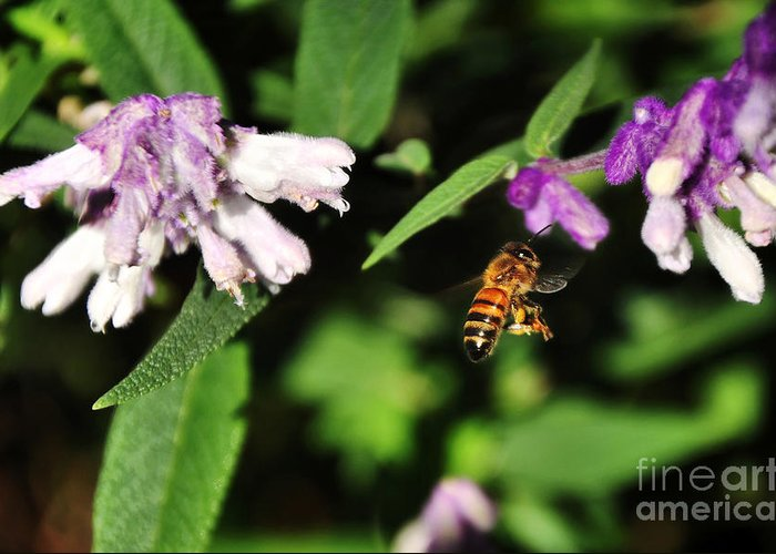 Photography Greeting Card featuring the photograph Bee In Flight by Kaye Menner