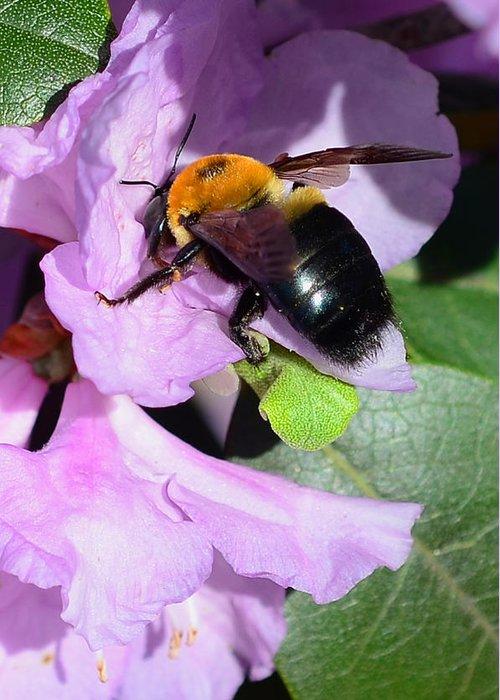 Bee On Azalea Bloom Greeting Card featuring the photograph Bee On Azalea Bloom by Lisa Phillips