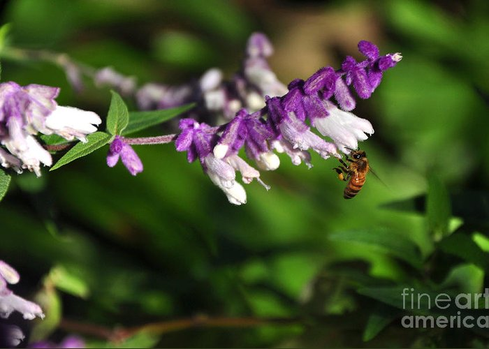 Photography Greeting Card featuring the photograph Bee On Flower by Kaye Menner