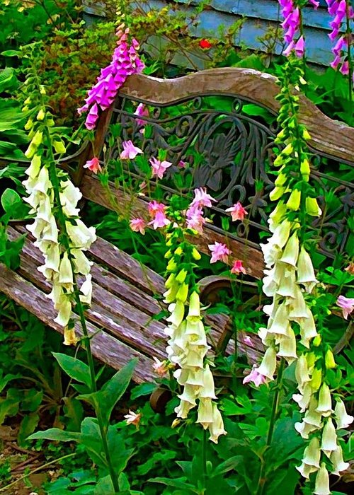 Foxglove Flowers Greeting Card featuring the photograph Bench Among The Foxgloves by Julie Dant