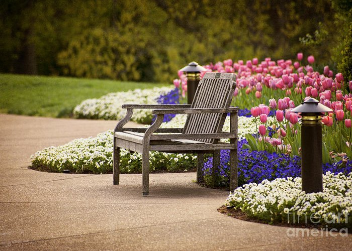 Spring Garden Greeting Card featuring the photograph Bench In The Park by Cheryl Davis