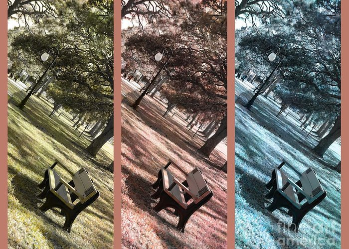 Triptych Greeting Card featuring the photograph Bench In The Park Triptych by Susanne Van Hulst