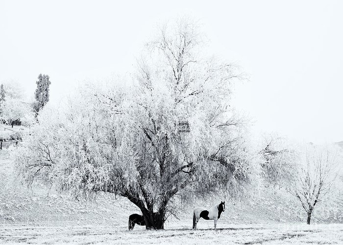 Horses Greeting Card featuring the photograph Beneath A Frosty Canopy by Mike Dawson