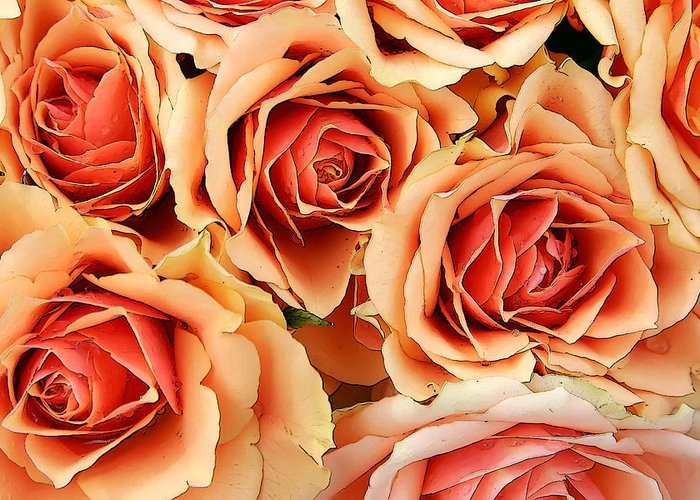 Kg Greeting Card featuring the photograph Bergen Roses by KG Thienemann