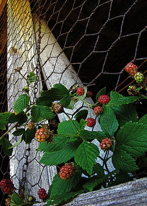Rocky River Greeting Card featuring the photograph Berries by Jessica Brawley