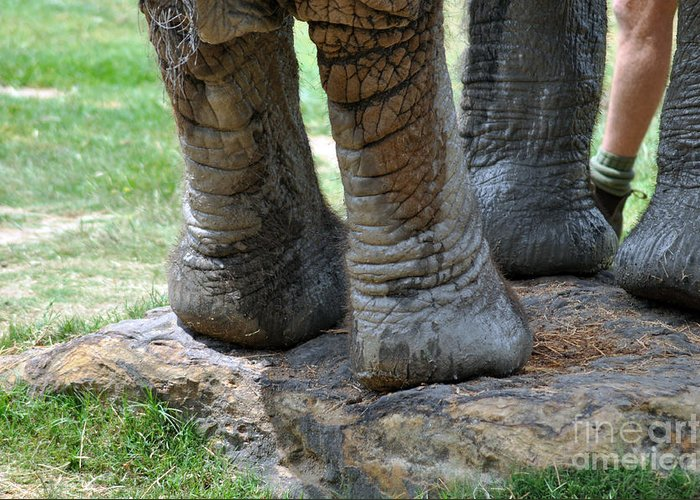 Elephant Greeting Card featuring the photograph Best Foot Forward by Joanne Kocwin